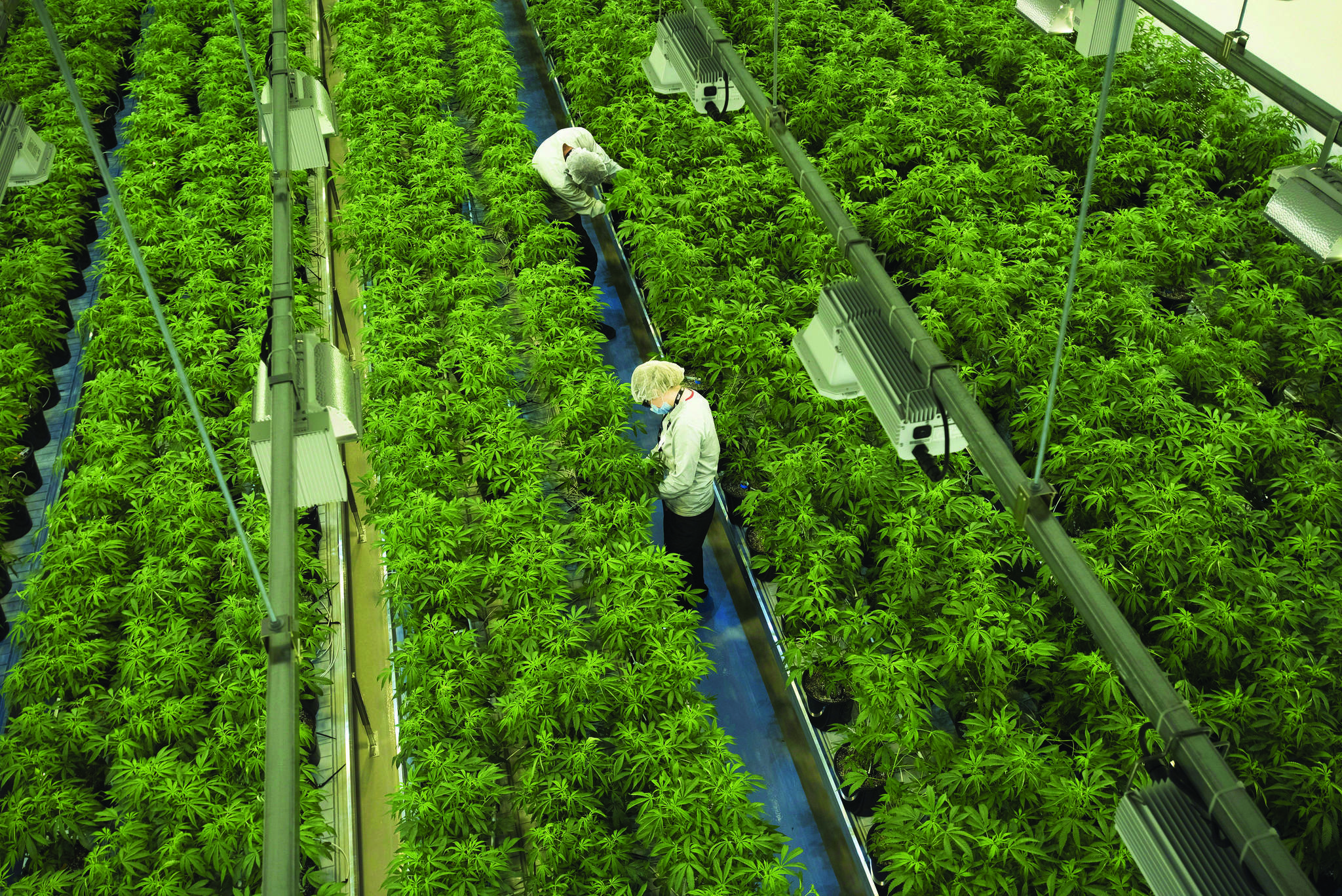 Canopy Growth Corp. closed down its Aldergrove cannabis greenhouses back in March, but still operates a visitors centre in Ontario. (Sean Kilpatrick/Canadian Press)