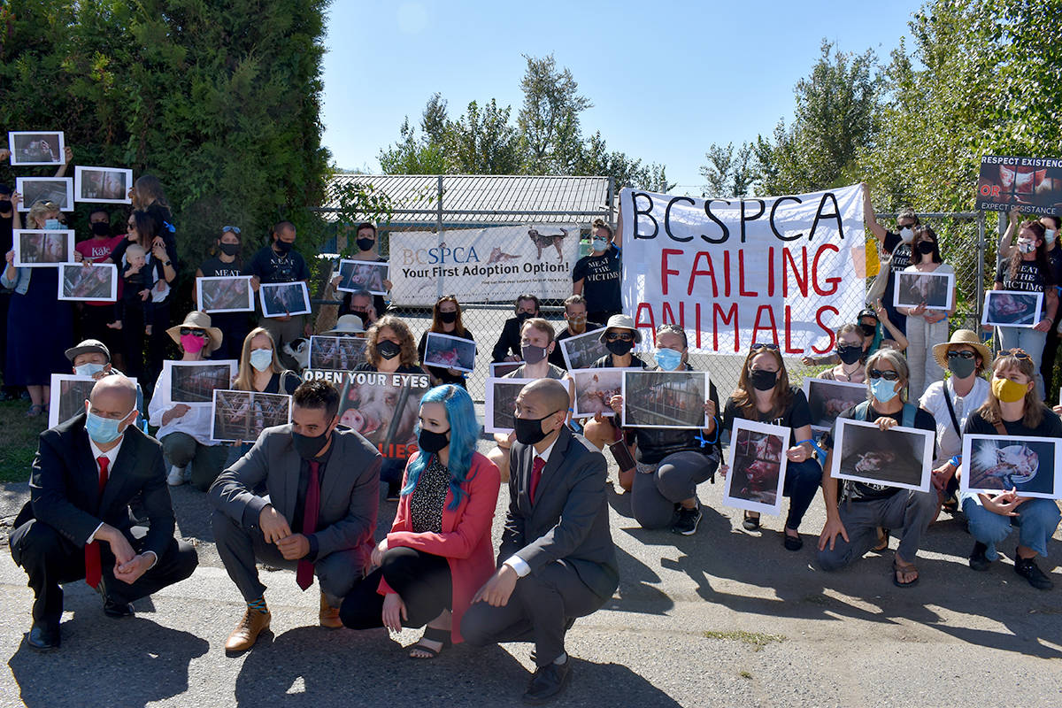 Protestors gather at the BC SPCA following the first court appearance of the four individuals charged in the Excelsior Hog Farm incident from April 2019. (Ben Lypka/Abbotsford News)