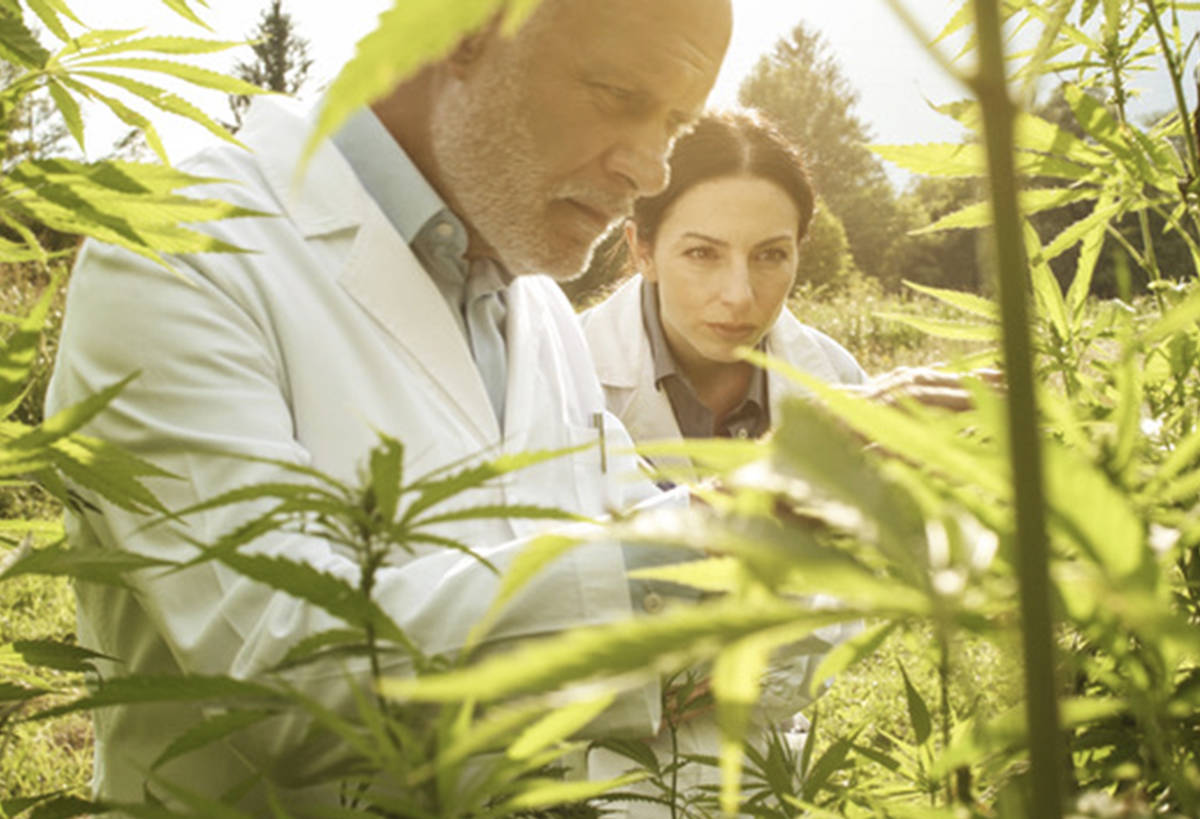 Seniors form the fastest growing segment of new cannabis users in Canada. (Adobe Photostock photo)