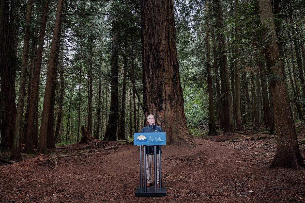 Forests Minister Doug Donaldson announces program to preserve largest trees in B.C., Saanich, July 17, 2019. (B.C. government)