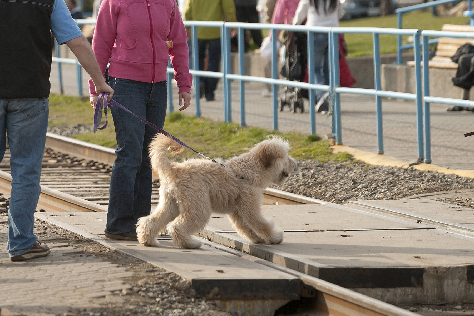 Dogs will be allowed on the White Rock Promenade starting Oct. 1. (File photo)