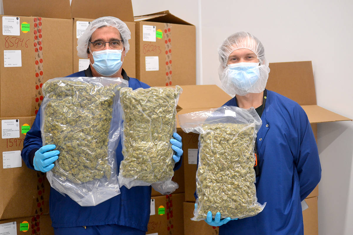 Andy Hale and Donald Dinsmore show off cannabis at Adastra Lab Holdings in the Langley Township. (Ryan Uytdewilligen/Aldergrove Star)
