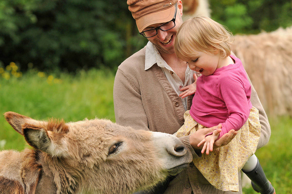 Will Faughnan holds two-year-old daughter, River, as she feeds Bundle, a Sicilian miniature donkey at RLDD Farm in Chilliwack on June 8, 2013. Friday, Oct. 2 is World Farm Animals Day. (Jenna Hauck/ Chilliwack Progress file)