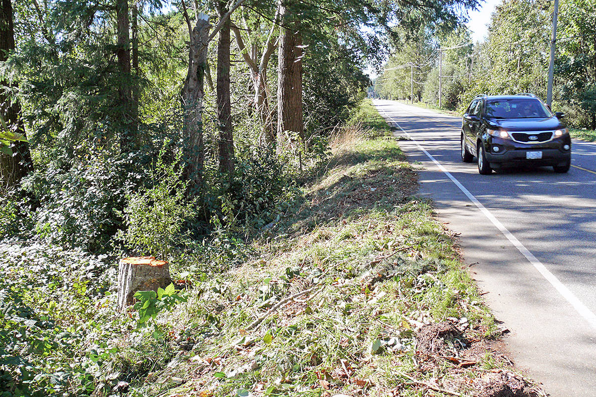 An Aldergrove man died when he was struck by a falling tree in the 25100 block of Robertson Crescent on Thursday, Sept. 24, 2020 while out for a walk (Dan Ferguson/Langley Advance Times)