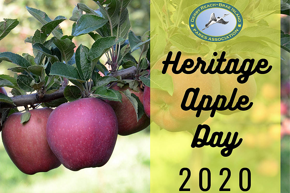 This event, which pays homage to Langley's historic apples and orchards, has had to move online this year. Find out more about what's in store. Online events kick off this weekend. (Special to Langley Advance Times)