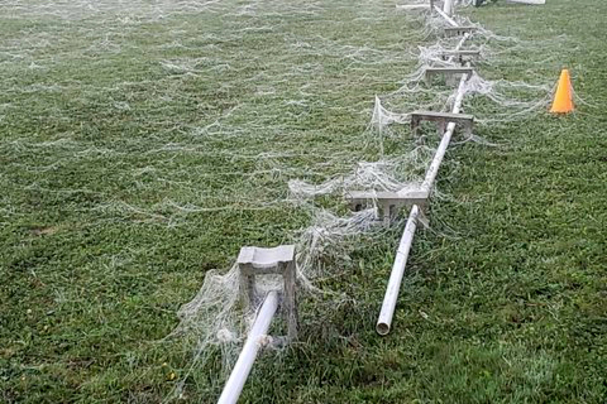 Thick white webbing blanketed parts of Agassiz-Harrison early Tuesday (Sept.29) morning. The webbing seemed to form or fall only in certain areas around the area, and it's not immediately clear why. (Contributed Photos/Caro Clark)