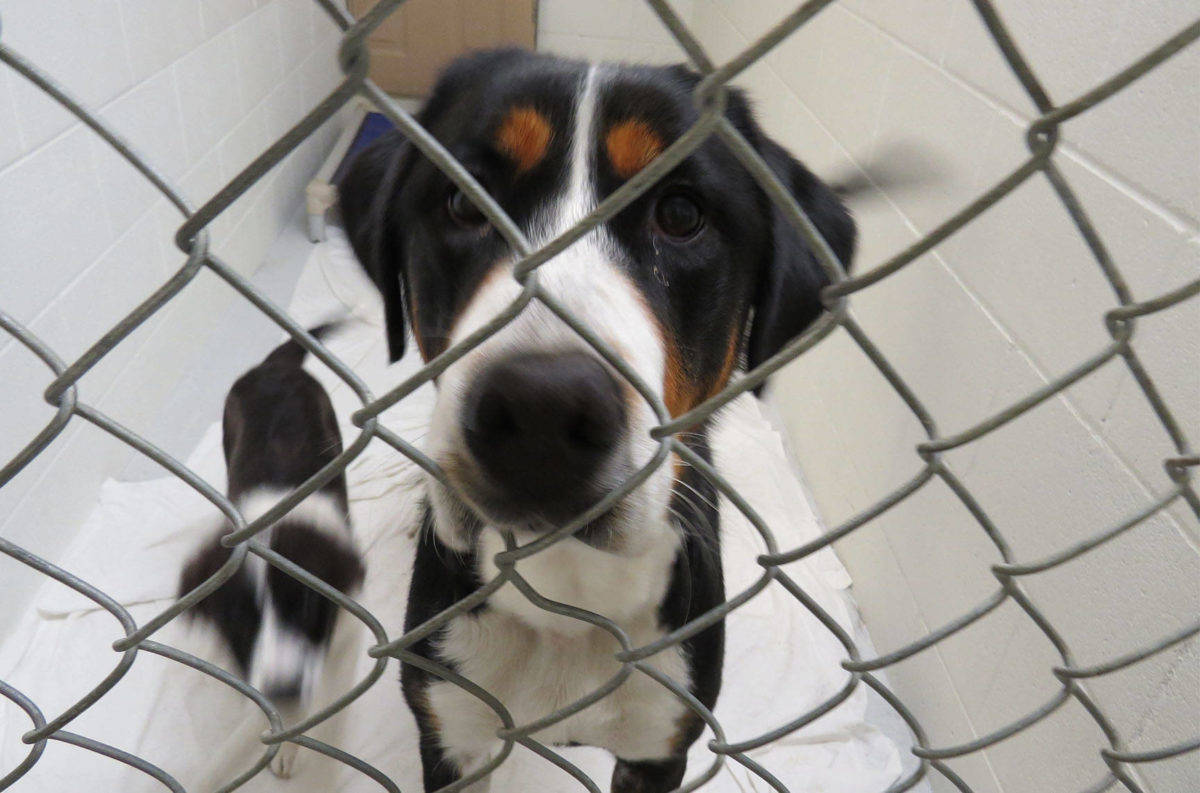 The animals were living in an extremely poor environment, according to the BC SPCA. Photo BC SPCA.