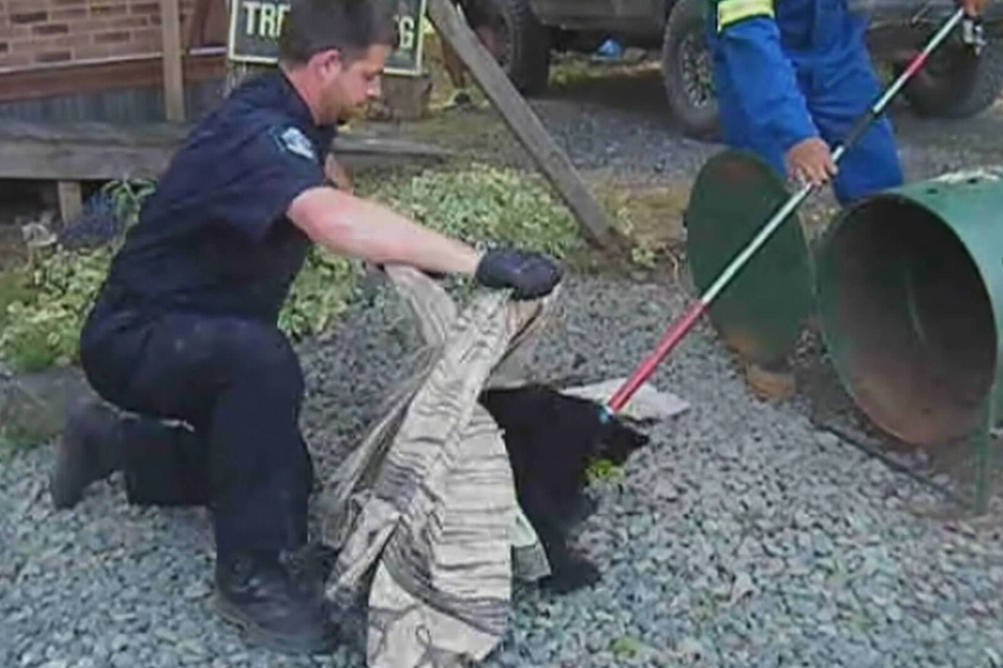 Former Conservation officer Bryce Casavant takes a cub to a rehabilitation organization on Vancouver Island. (Youtube screenshot)