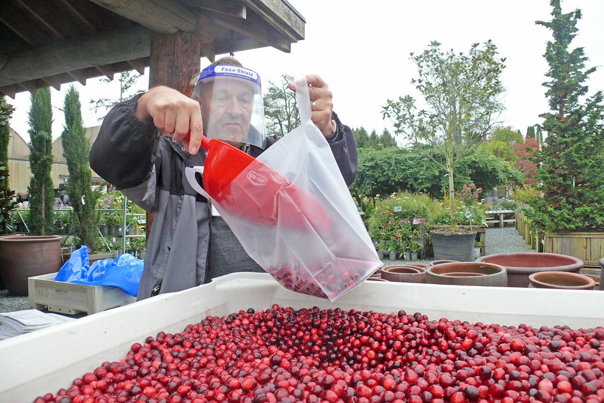 Langley Hospice Society volunteer Manfred Rossdeutscher fills a bag with cranberries Sunday, Oct. 11 at the Cedar Rim Nursery on Glover Road in Langley. Proceeds from the sale go to support the hospice. (Dan Ferguson/Langley Advance Times)