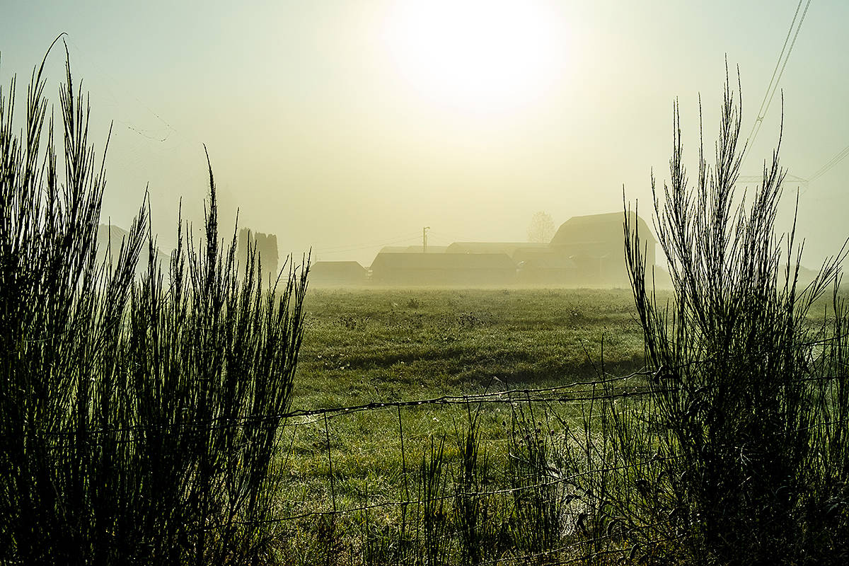 "Langley's Joy Ruffeski shared a few images of fall. This one, is of a farm off 40th Avenue, in the 21200-block, taken last weekend she described as a golden foggy morning. ""A magical morning with the mist and the sun shining through it making everything glow,"" she said. (Special to Langley Advance Times)"