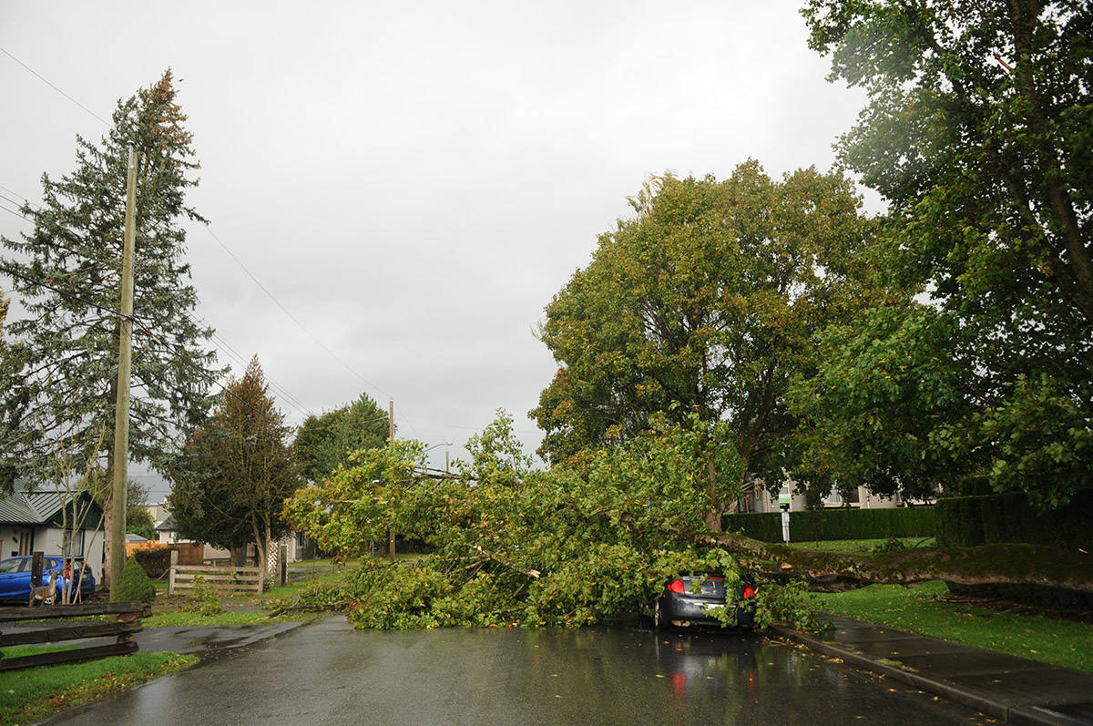 A fallen tree lays on top a car parked on Nowell Street near Chilliwack Central Road on Tuesday, Oct. 13, 2020 during a wind storm in Chilliwack. (Jenna Hauck/ Chilliwack Progress)