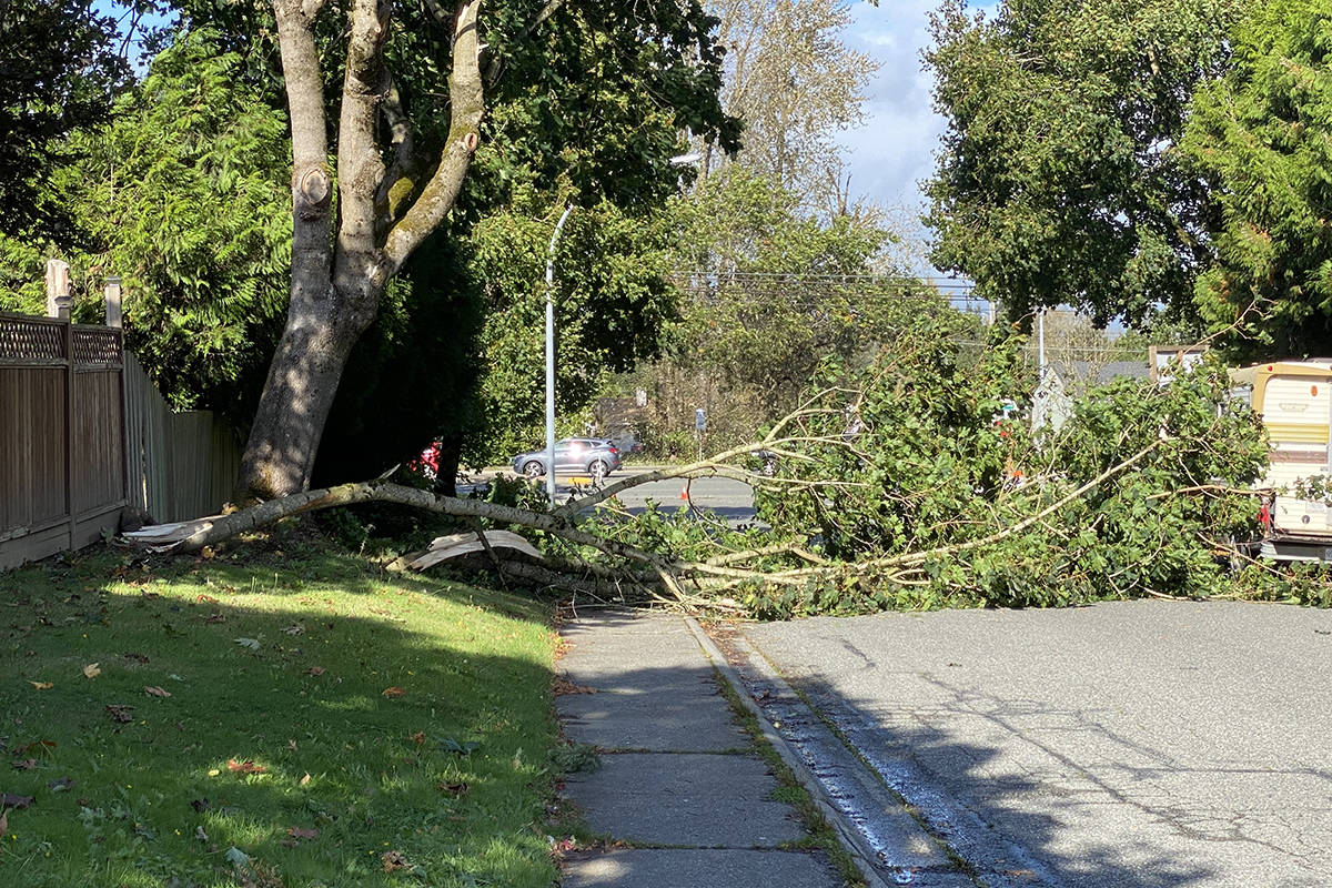 Township firefighters blocked traffic to this residential street in Aldergrove after the wind storm on Tuesday, Oct. 13, 2020 knocked a tree down onto the road. (Joti Grewal/Langley Advance Times)