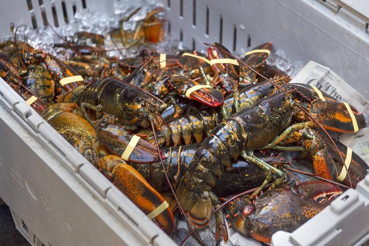 A crate of lobsters sits on the sidewalk outside the legislature in Halifax on Friday, Oct. 16, 2020. The chief of the First Nation behind a disputed moderate livelihood lobstery fishery in Nova Scotia says recent vandalism and the loss of potential sales has cost the band more than $1.5 million. THE CANADIAN PRESS /Andrew Vaughan