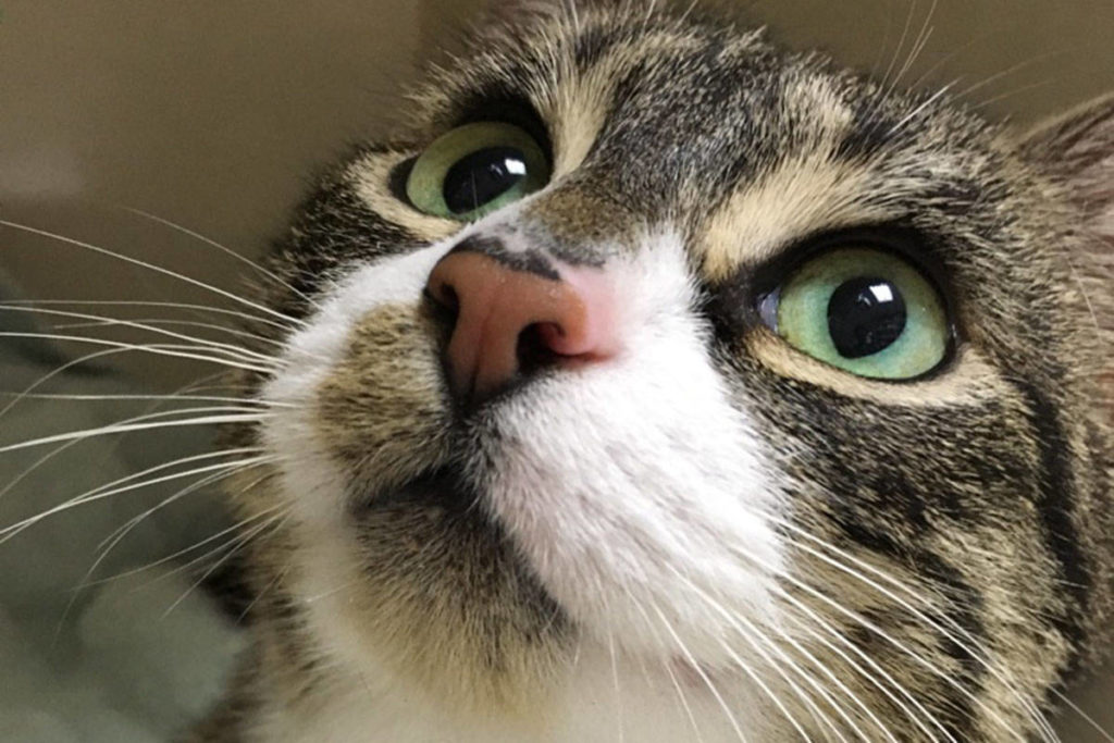 Langley's CARES cat shelter is holding an online fundraiser (file)