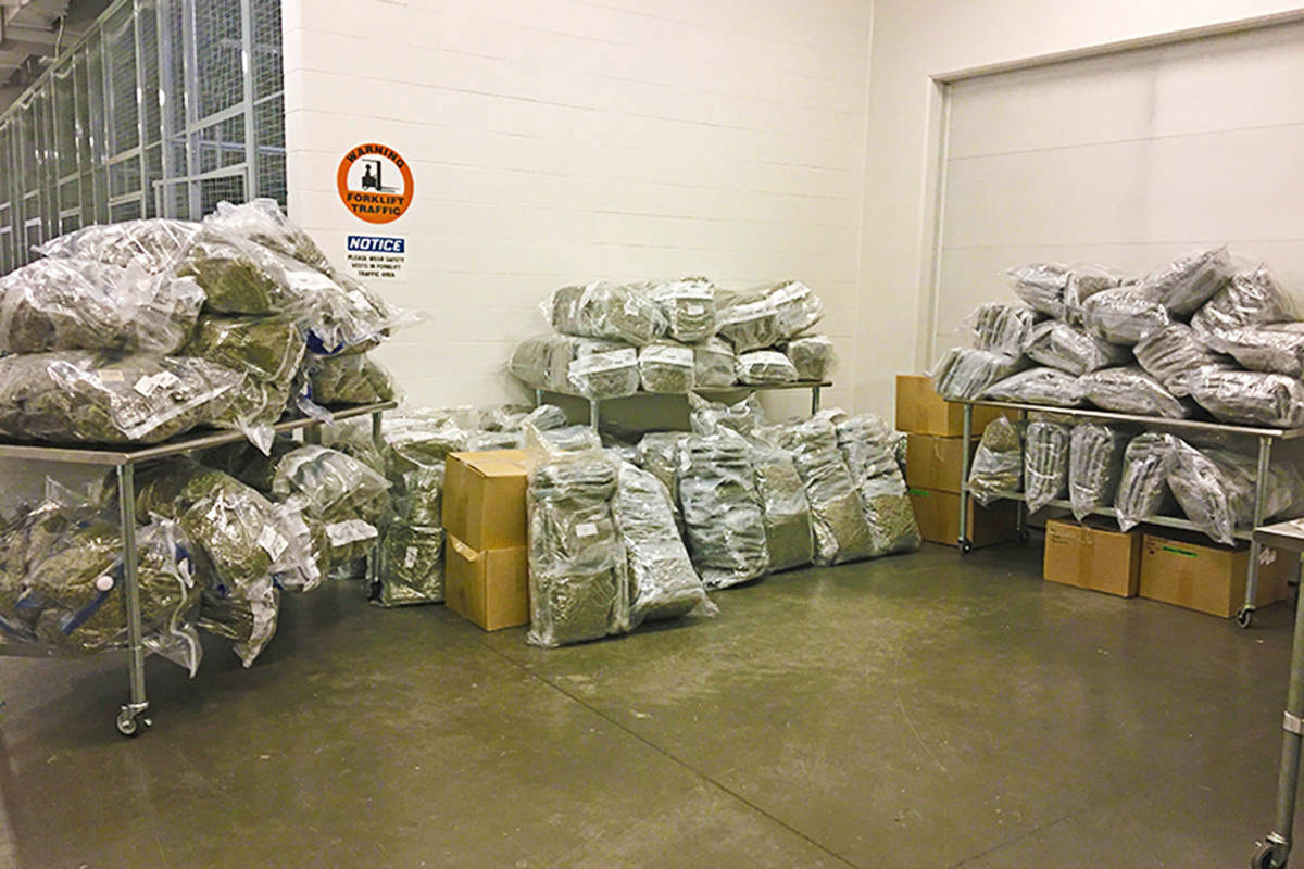 The RCMP photo shows cannabis that was seized as part of the E-Prominent investigation. (RCMP)