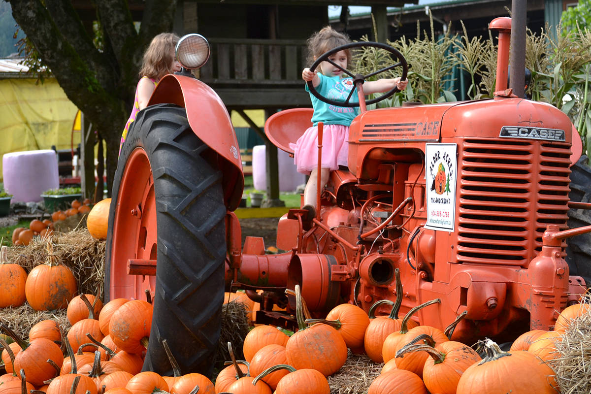 Aldor Acres is open to the public for pumpkin picking and animal visiting. (Ryan Uytdewilligen/Aldergrove Star)