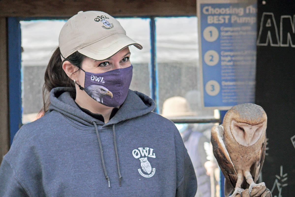 OWL volunteer Katie Fink brought Alba the barn owl to the annual Halloween event at Art's Nursery (Dan Ferguson/Langley Advance Times)
