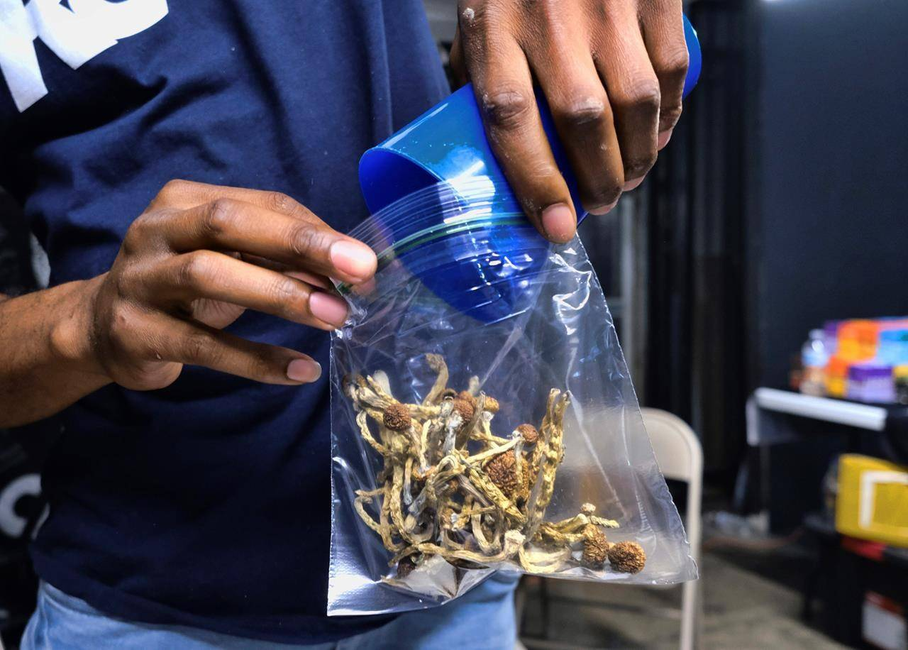 FILE - In this May 24, 2019, file photo a vendor bags psilocybin mushrooms at a pop-up cannabis market in Los Angeles. Voters in Oregon in November 2020 will decide on a measure that would legalize therapeutic, regulated use of psilocybin. The measure would require the Oregon Health Authority to allow licensed, regulated production and possession of psilocybin exclusively for administration by licensed facilitators to clients. (AP Photo/Richard Vogel, File)
