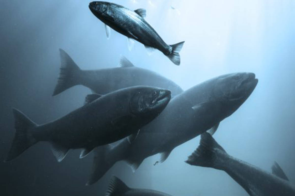 The National Farm Animal Care Council (NFACC) and the Canadian Aquaculture Industry Alliance have launched a public comment period for the country's first Code of Practice for the Care and Handling of Farmed Salmonids. (Whole Oceans image)
