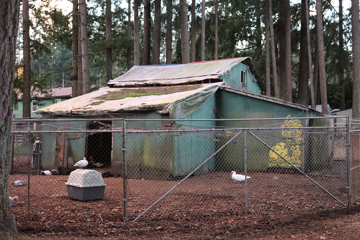 The existing barn at RASTA Sanctuary is in need of a replacement. (Cole Schisler photo)