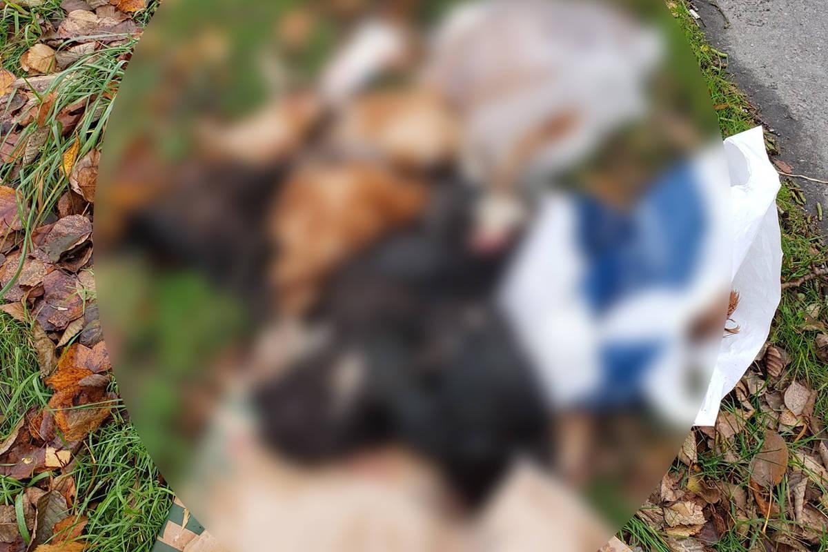 Aldergrove resident Jocelyn Titus found 15 dead chickens along Robertson Crescent. (Jocelyn Titus/Special to the Aldergrove Star)