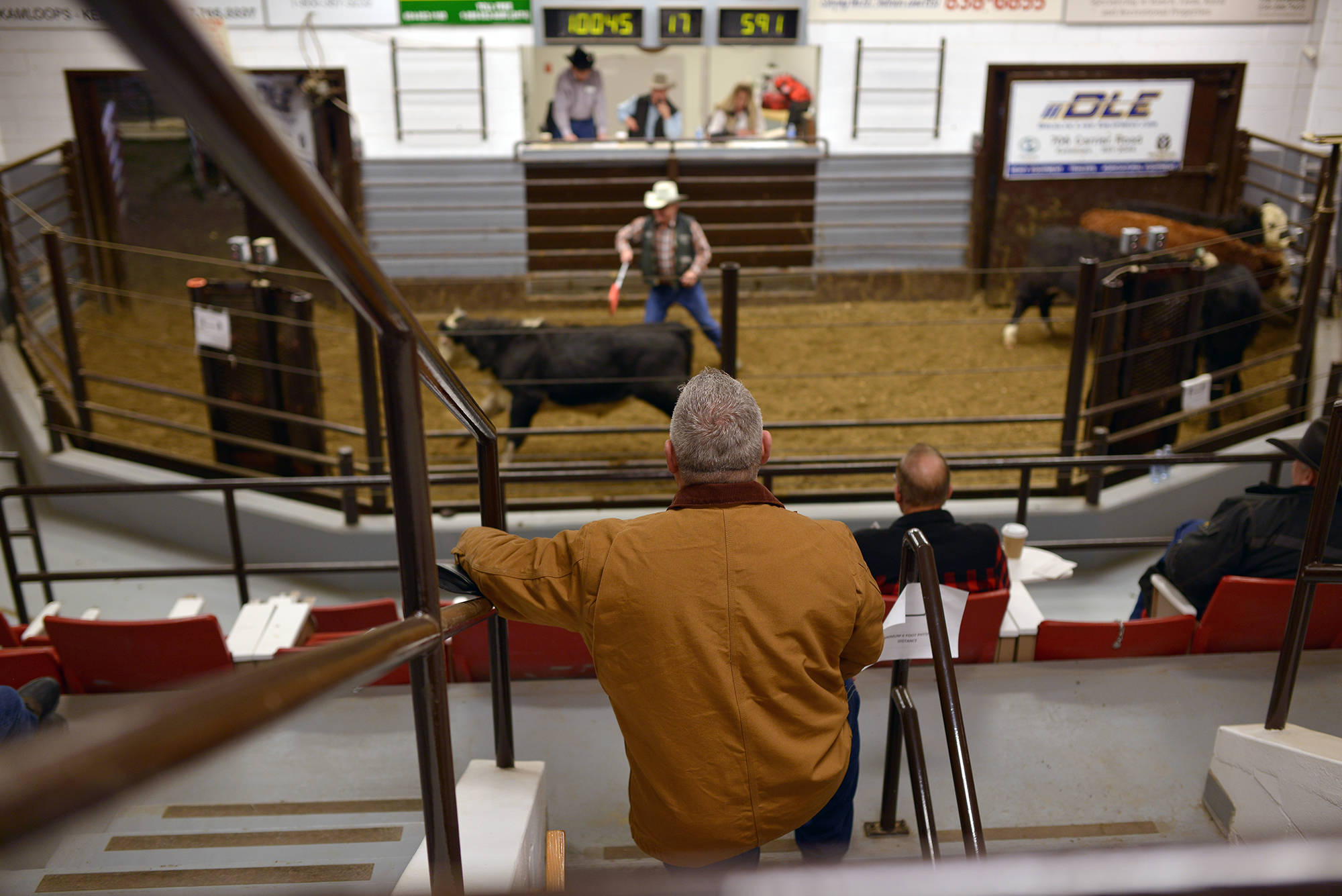 Every Tuesday, Cory Lepine is found at BC Livestock Producers Co. in Kamloops, where cattle are being auctioned. There, he meets with farmers, industry leaders and brand inspectors, and oversees auctions. (Phil McLachlan - Black Press Media)