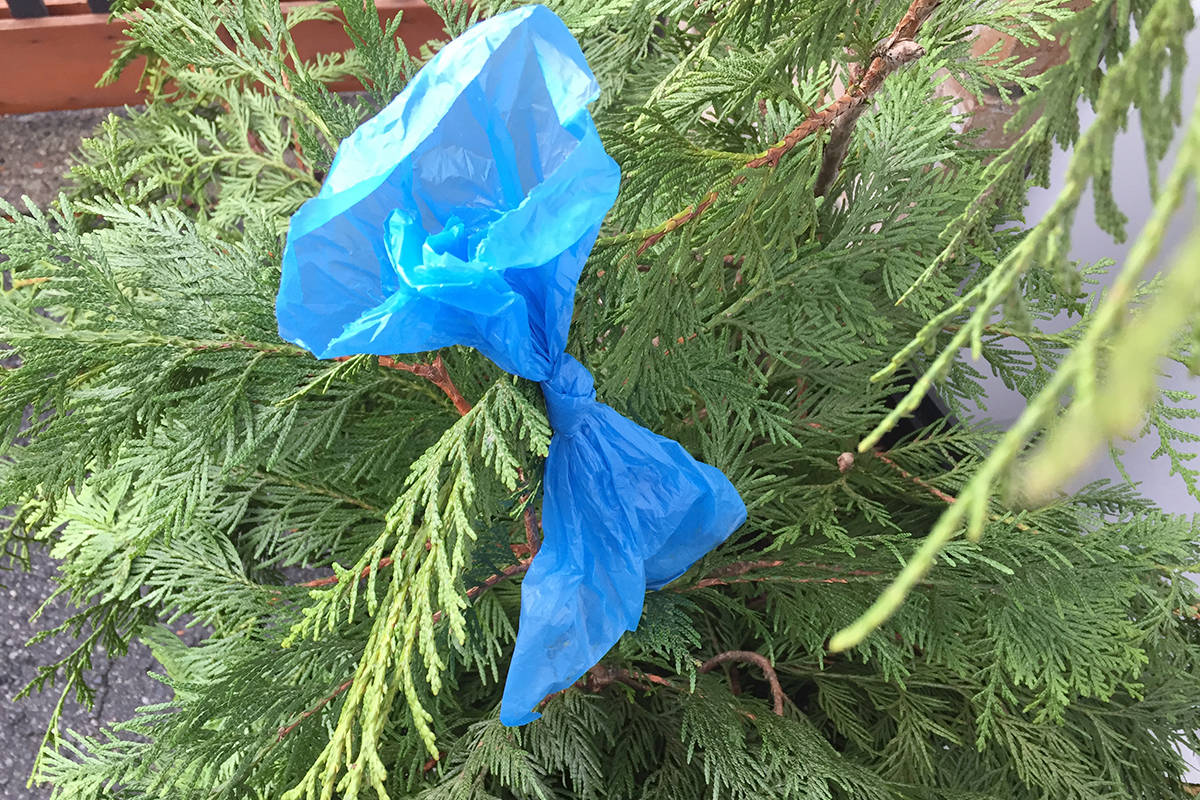 Langley Township and City provide garbage receptacles where people can deposit their bags of dog poop instead of tossing the bags into bushes. (Langley Advance Times)