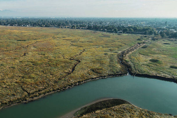 A UBC study recommends an multi-government investment of $381 million to protect 102 species at risk in the Fraser River estuary. (Photo supplied by Yuri Choufour)