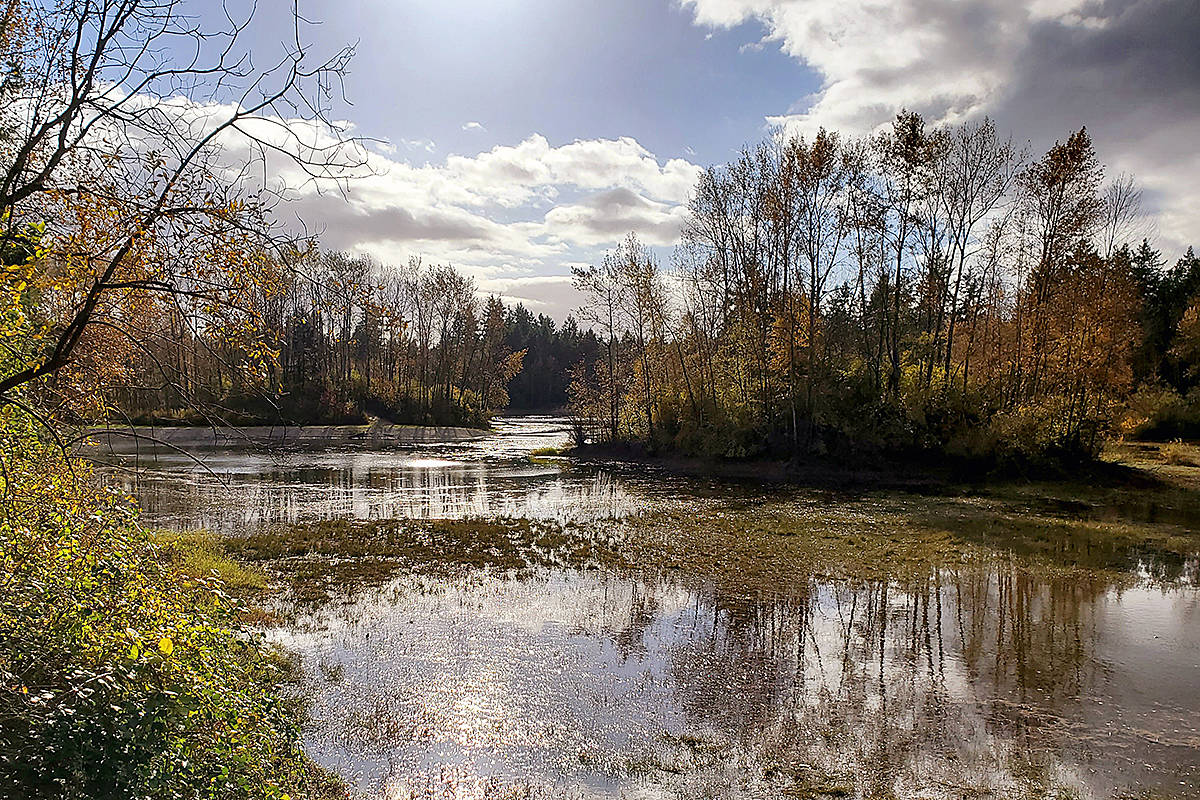 "Jim Orlowski, a regular contributor to Through Your Lens, shared this recent picture of what he calls a ""lovely little pond"" near the south entrance of Campbell Valley Regional Park. It's located just off the shaggy mane trail. (Special to The News)"