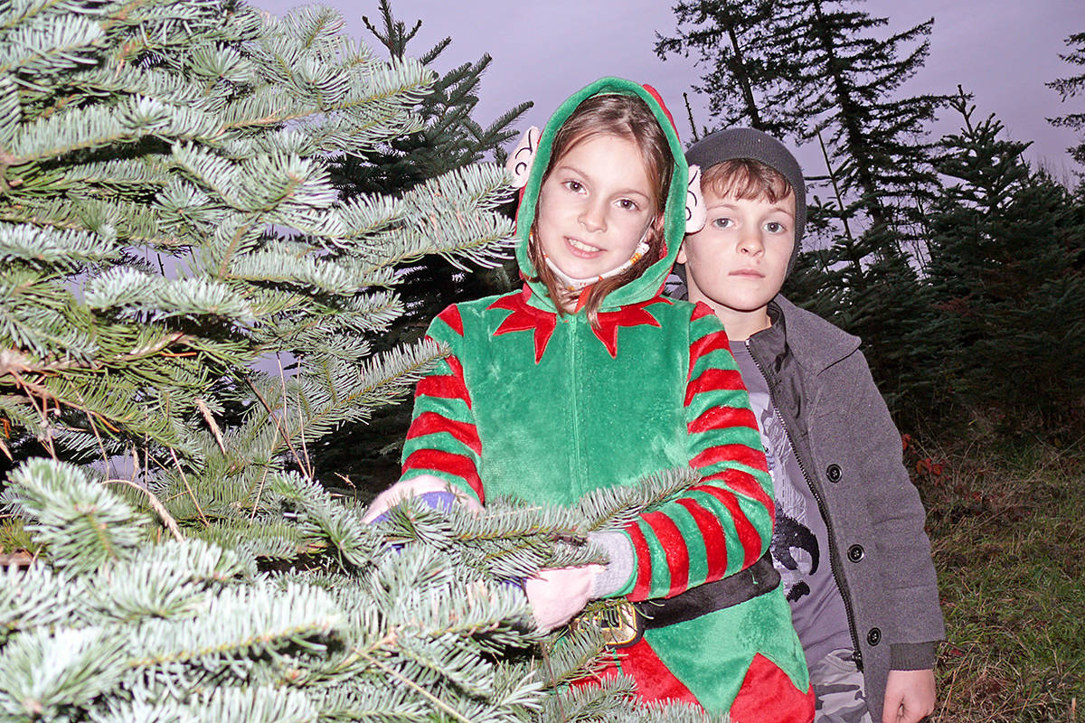 Alice Cobaschi, 8 was assisting customers dressed up a Christmas elf, while younger brother Caleb, 6, assisted at the Tannenbaum Tree Farm at 5398 252 St in Aldergrove on Sunday, Nov. 29, 2020. They took their masks off for the photo. (Dan Ferguson/Langley Advance Times)
