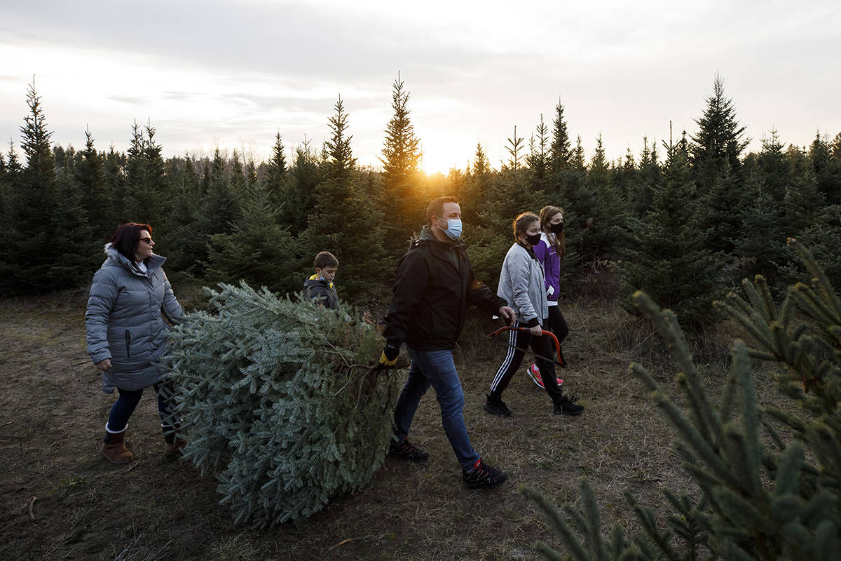 Ash and Lisa Van carry a freshly cut Christmas tree while wearing personal protective masks at a Christmas Tree Farm in Egbert, Ontario, Sunday, Nov. 29, 2020 THE CANADIAN PRESS/ Cole Burston