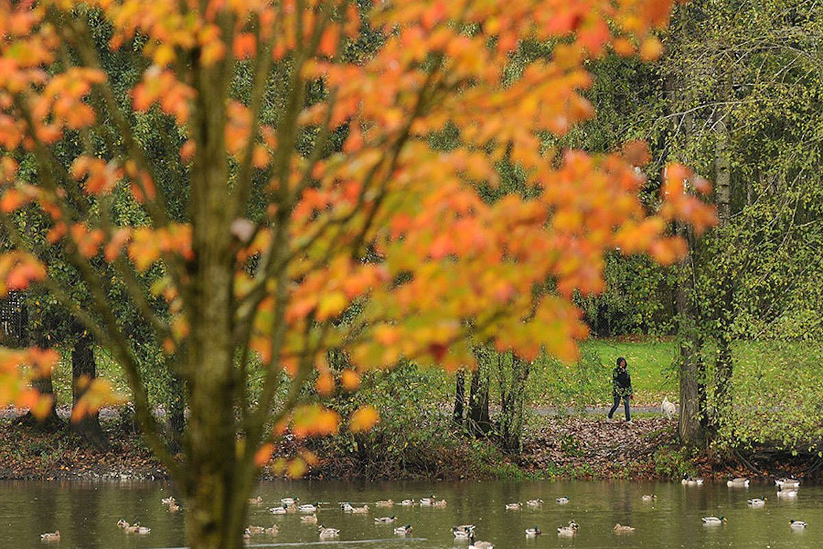 A woman walks her dog in Sardis Park on a rainy autumn afternoon Oct. 15, 2014. (Jenna Hauck/ Chilliwack Progress file)