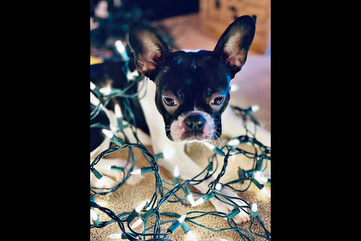 Kelli Warawa: Roxy's first Christmas
