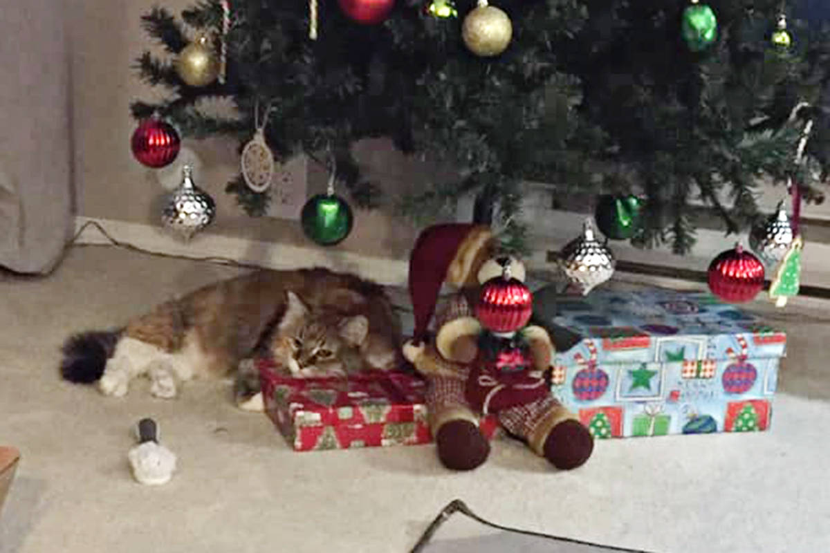 Tammy Bozzard: Maggie under the Christmas tree