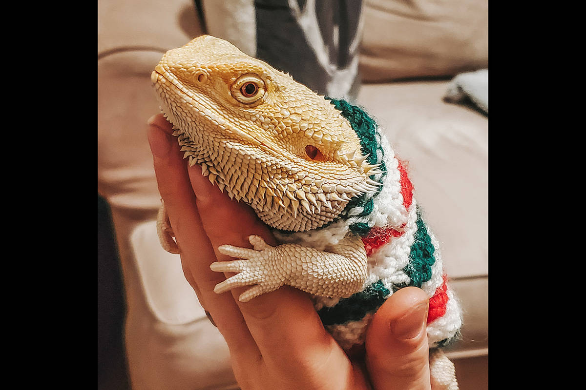 William Ness: Gideon in his festive sweater