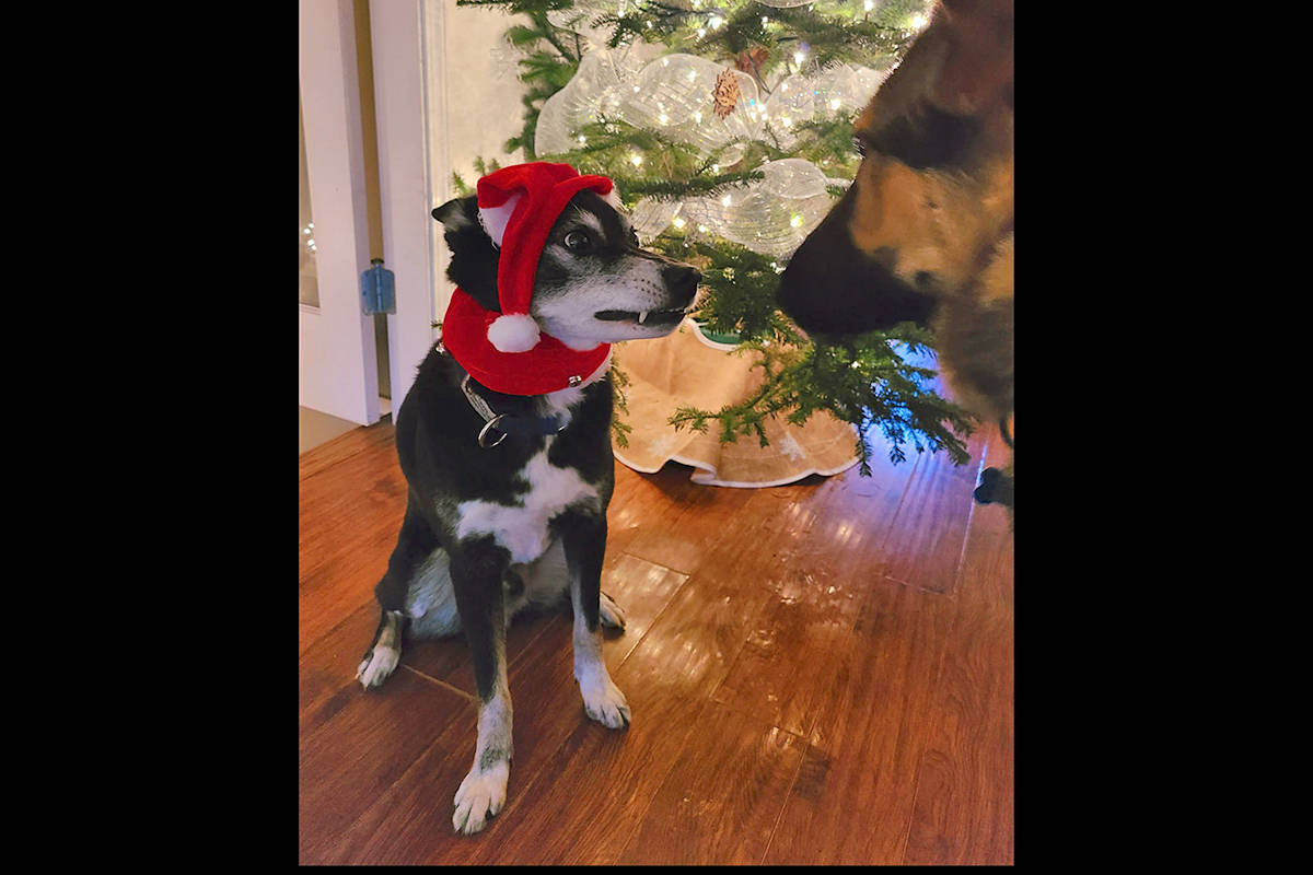 Erin Scott sent in a photo of a pup not in the holiday spirit