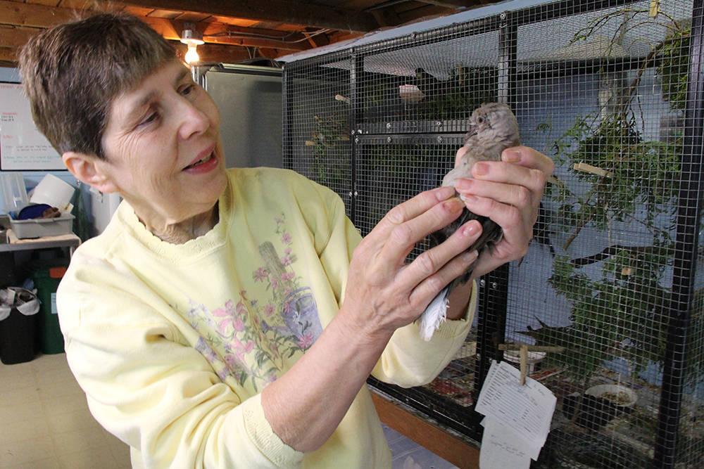 Elizabeth Melnick at Elizabeth's Wildlife Center in Abbotsford. (Abbotsford News file photo)