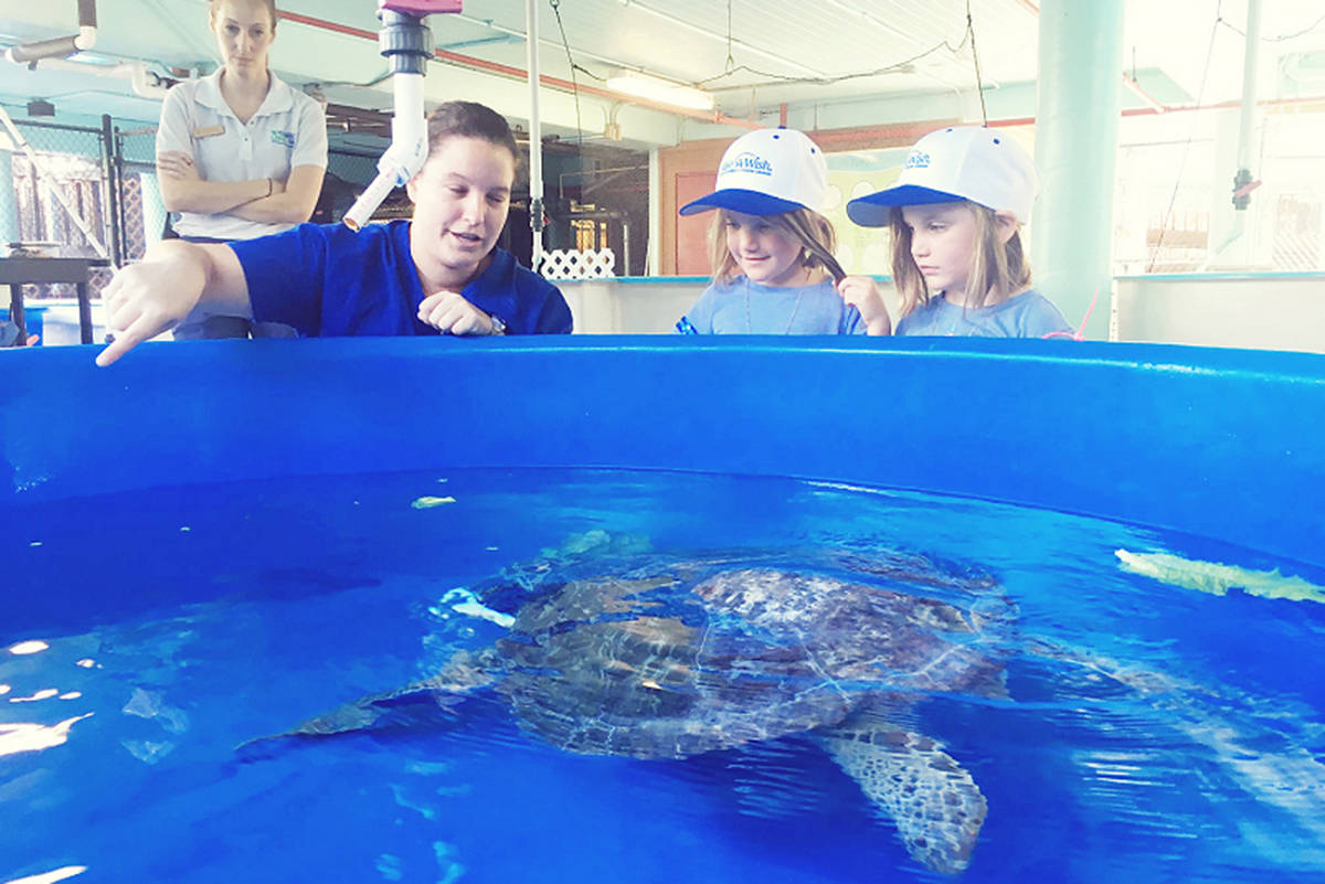 Rose and Nina watch Schoona the sea turtle at the Florida and the Gumbo Limbo Nature Centre. (Submitted/Make-A-Wish British Columbia and Yukon)