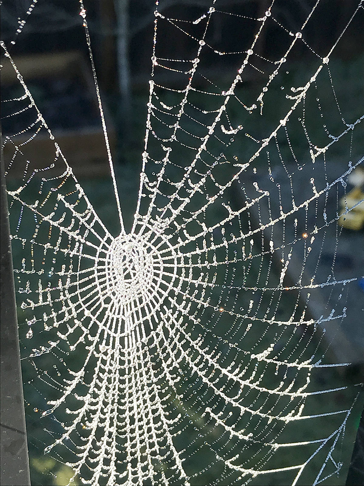 "Su VanderHorst captured this picture of a cobweb on her back deck in Murrayville on Saturday morning. ""Just beautiful!"" she said. (Special to Langley Advance Times)"