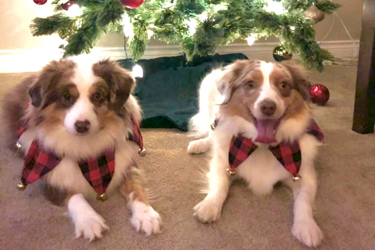 Merry Christmas from Ozzie and Kip. (Christina Ward Schultz/Special to the Star)