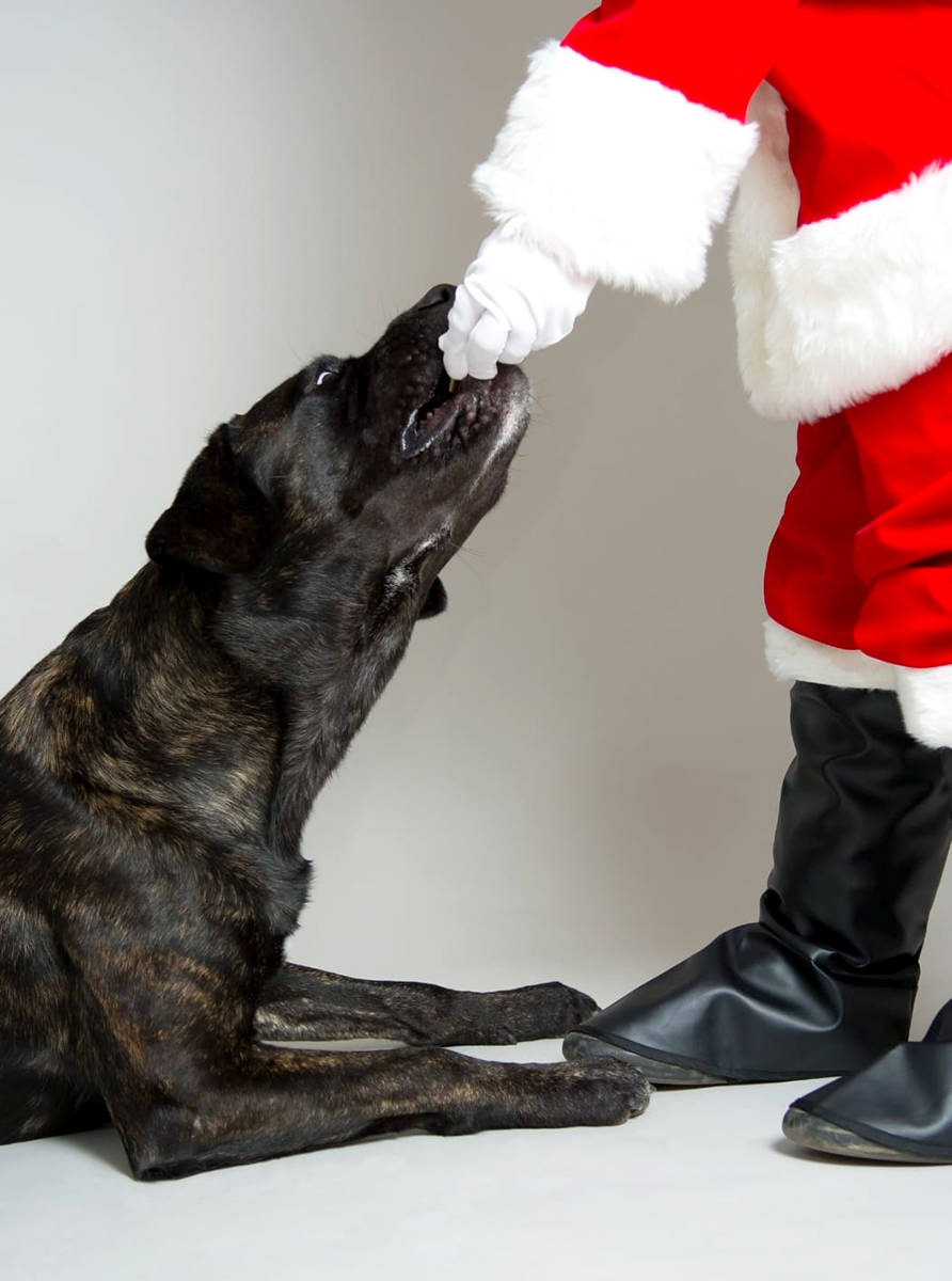 """""""Monkey takes them so nicely. He cannot wait to leave treats out for Santa."""" (Tiffany York/Special to the Star)."""