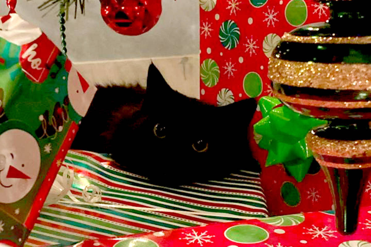 """""""Navi lays under the tree to remind us all he is a gift."""" (Melissa Epp/Special to The Star)"""