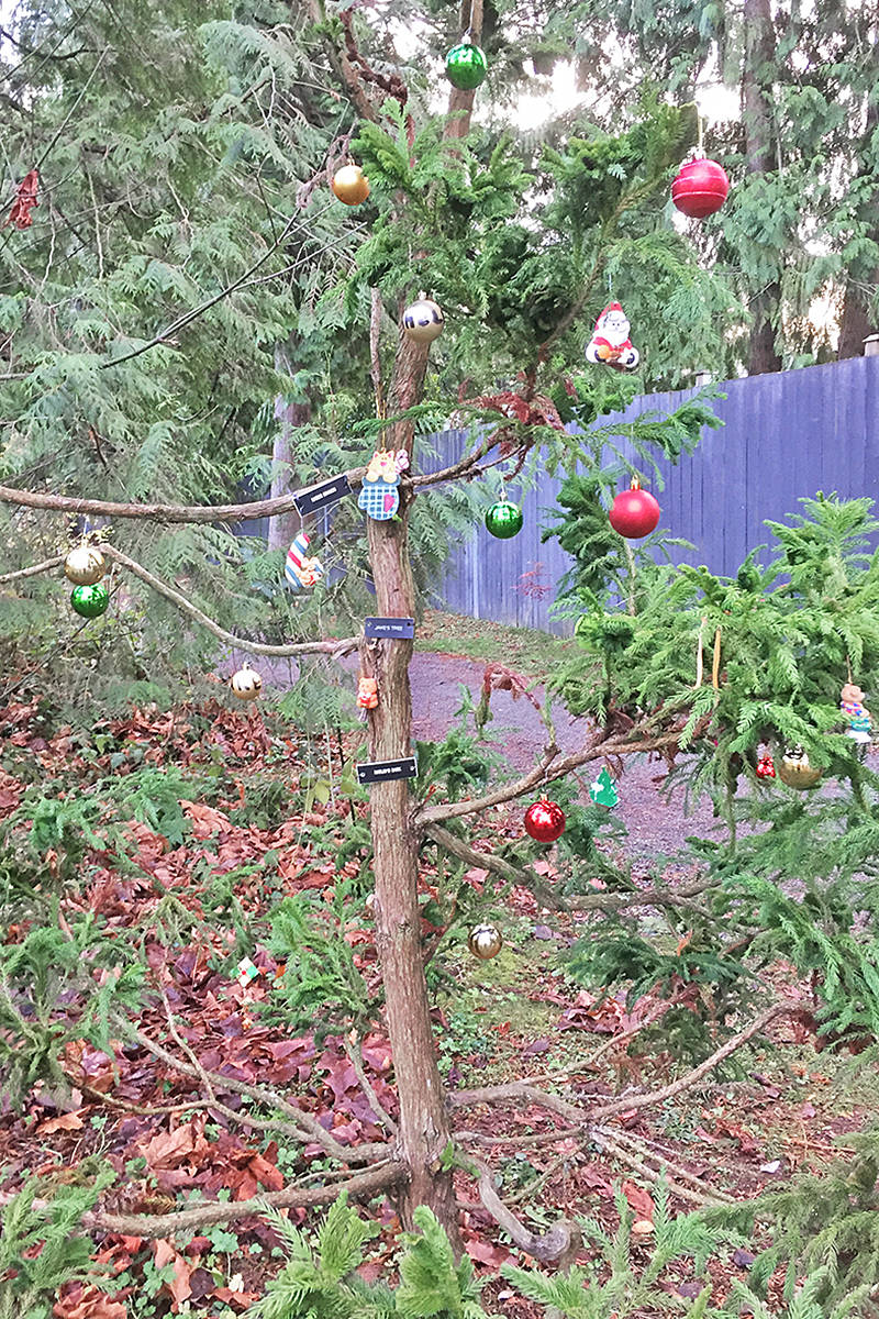 This year, someone added Christmas decorations to 'Jake's Tree in Langley City's Hunter Park (Special to Langley Advance Times)