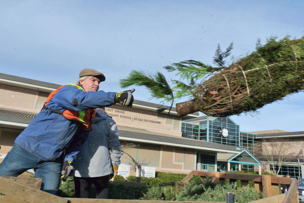 Chad Friesen. leader of the First Walnut Grove Scout troop, added another former Christmas tree to the pile at Walnut Grove Secondary in 2019. This holiday season, the troop will be back, because the school has a long driveway that allows COVID-19 distancing. Some tree chipping events in Langley have had to be cancelled. (Langley Advance Times file)