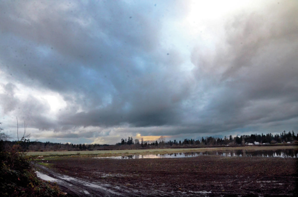 A field near Fort Langley shortly before Christmas. (Matthew Claxton/Langley Advance Times)