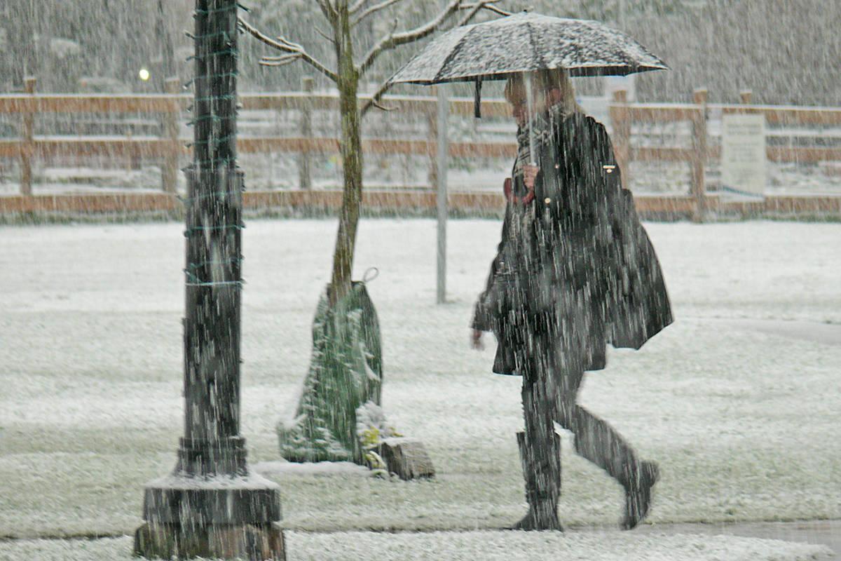 Winter arrived in Langley Monday, dumping damp snow (Dan Ferguson/Langley Advance Times)