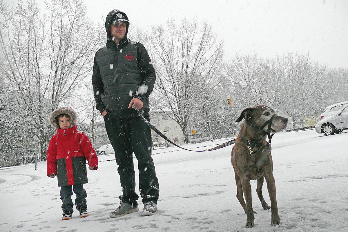 Winter arrived in Langley Monday, Dec. 21, dumping damp snow. Charlie Brown, 12, took his humans out for a walk. (Dan Ferguson/Langley Advance Times)