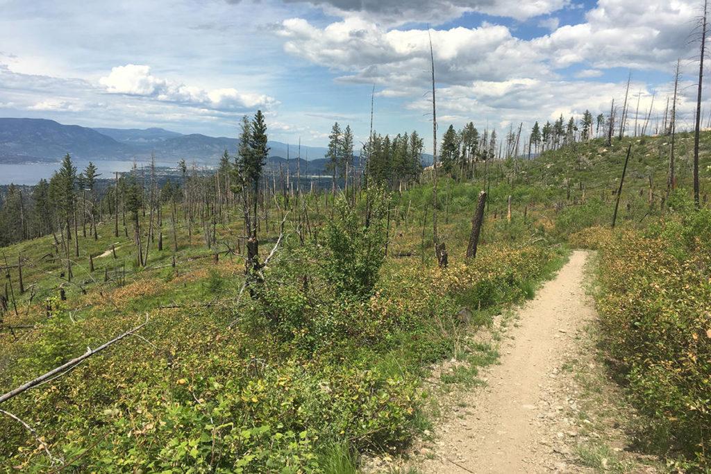 A trail along Myra-Bellevue Provincial Park, southeast of Kelowna. Photo: Tourism BC