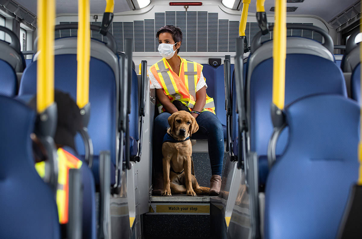 Millie, a trainee service dog, sits with her volunteer Adriana Chiossone while riding a bus during a training exercise at the Vancouver Transit Centre bus depot, in Vancouver, on Wednesday, July 22, 2020. Approximately two dozen dogs participated in training exercises on different types of buses as part of a one-day training program organized by B.C. & Alberta Guide Dogs and Translink, to accelerate training that has fallen behind due to COVID-19. Volunteers who help raise and train the dogs from seven-weeks-old to 15-months have been limited in the amount of public training they can do due to the coronavirus pandemic. The dogs that go through training later become paired with veterans or first responders dealing with PTSD, children who have autism, guides for the blind or enter the charity's breeding program. THE CANADIAN PRESS/Darryl Dyck