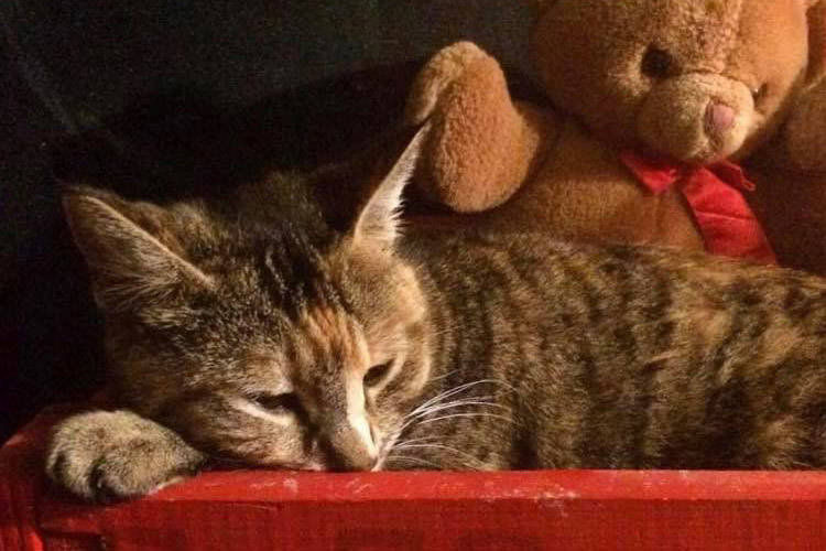 Cora the cat enjoys some Christmas comfort after spending the last four months outdoors, surviving in Promontory while trying to find her lost owners. (Facebook photo)